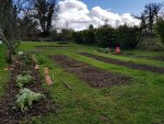 March – preparing the vegetable plot and sewing seeds